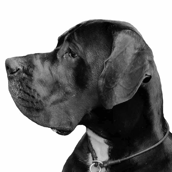 DoggeDion_1