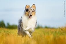 Hundefotografie_Tierfotografie_Marburg_Fotografin_Christine_Hemlep_Hund_...