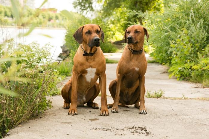 Dayo und Suri 5