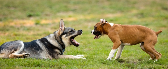 dogs-1041483_1280
