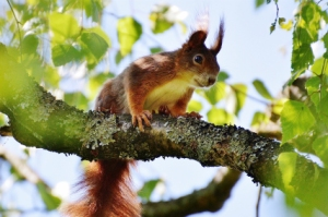 squirrel-1409107_1280